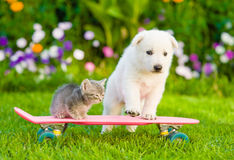 White Swiss Shepherd`s puppy and tabby kitten on skateboard Royalty Free Stock Image