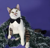 White and tabby cat in bow tie and Christmas tinsel sitting on b Stock Photo