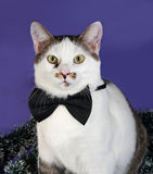 White and tabby cat in bow tie and Christmas tinsel sitting on b Royalty Free Stock Images
