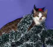 White and tabby cat in red hat and Christmas tinsel sitting on b Stock Photos