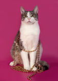 White and tabby cat sitting in Christmas tinsel on pink Royalty Free Stock Images