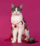 White and tabby cat sitting in Christmas tinsel on pink Stock Image