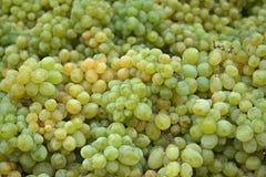 White table grapes. Pile of white table grapes Stock Photos