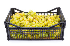 White table grapes (Vitis) in plastic crate. On white Stock Photography