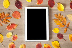 White tablet on a wooden table with colorful autumn leaves, busi Royalty Free Stock Photography