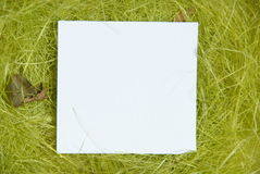 White taglet in hay. Small white taglet in nest, made with hay Royalty Free Stock Image