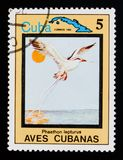 White-tailed Tropicbird Phaethon lepturus, Endemic birds, Cuban circa 1983. MOSCOW, RUSSIA - AUGUST 29, 2017: A stamp printed in Cuba shows White-tailed Stock Image