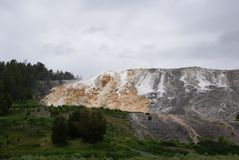 White, tan, and gray terraces with trees on the left and foreground at Mammoth Hot Springs in Yellowstone National Park stock image