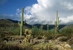 White Tank Mountains, AZ Stock Photo