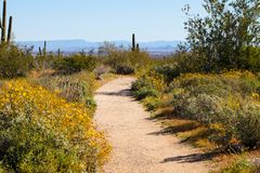 White Tank Mountains Hiking Trail. Hiking trail in the White Tank Mountains in the Sonoran desert outside Phoenix, Arizona during spring stock images