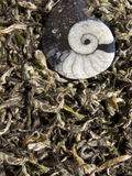 White tea - chinese Bai Cha Royalty Free Stock Photography