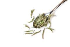 White tea leaf. Chinese white tea leaf Silver needle white tea on white background  - isolated Stock Image
