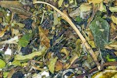 White Tea Pai Mu Tan Royalty Free Stock Photo
