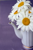 White teapot with bouquet of healing flowers Stock Photo