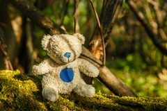 White teddy bear with a blue nose. Sits on a tree with moss in the forest royalty free stock images