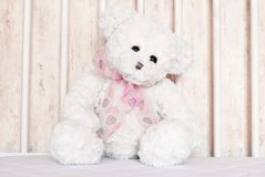 White teddy bear closeup Royalty Free Stock Image