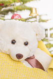 White teddy bear in front of christmas tree Royalty Free Stock Photo