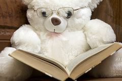 White Teddy bear with glasses reading a book Stock Photos