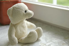 White Teddy bear. Looking out the window stock photos