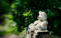 White teddy bear on the old garden bench in the summer garden. White fluffy teddy bear lonely sits on an old wooden bench in a overgrown garden stock image