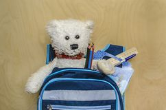 White Teddy bear sits in a knapsack  will go to school. White Teddy bear sits in a knapsack with pencils, pen, notebook coloring  will go to school Stock Images