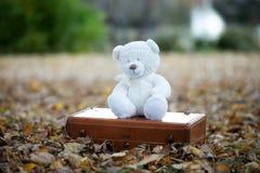 Teddy bear setting alone royalty free stock photos