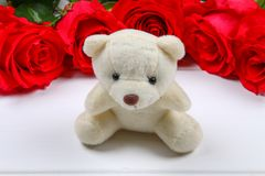 White teddy bear surrounded by pink roses on a white wooden table. Template for March 8, Mother's Day, Valentine's Day. White teddy bear surrounded by pink royalty free stock photo