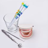 White teeth Stock Image