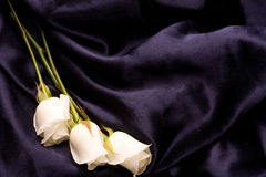 White tender roses ob black silk Royalty Free Stock Photography