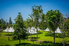 White tent on the green park empty with big green tree - photo indonesia stock photography