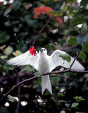 White tern with flower Royalty Free Stock Photography