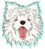 White Terrier Royalty Free Stock Photo