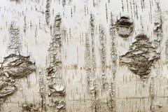 White  texture Stock Photos