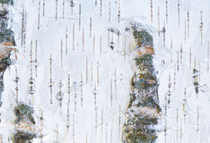 White texture of bark of old birch. Horizontal Royalty Free Stock Images