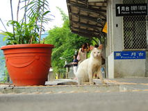 White thin cat at Shifen station. Cat standing at Shifen station in Taiwan Stock Image