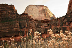 White Throne Red Rock Walls Zion Canyon Utah Stock Image
