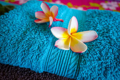 White tiare flowers on a towel Stock Images