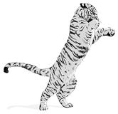 White tiger. Black and white tiger  illustration Royalty Free Stock Images
