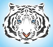 White tiger Stock Image