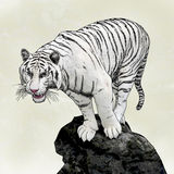 White tiger. Realistic Animal Drawing of White tiger standing on rock Stock Image