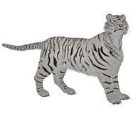White tiger in alert Stock Photos