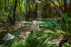 White tiger behind wire fence Royalty Free Stock Photography