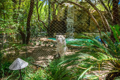 White tiger behind wire fence royalty free stock image
