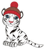 White tiger in hat Royalty Free Stock Image