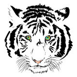 White tiger head Royalty Free Stock Photography