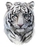 The white tiger. The head of the white tiger stock illustration
