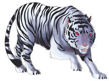 White tiger illustration in isolated background (vector) Royalty Free Stock Image