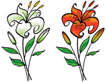 White and Tiger Lily Stock Photos