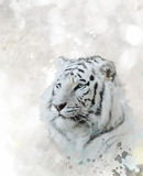 White Tiger Portrait. Digital Painting Of White Tiger Head royalty free illustration