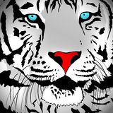White Tiger Portrait Stock Images